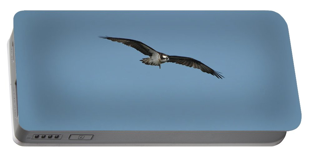 Osprey Portable Battery Charger featuring the photograph Osprey With His Wings Stretched by DejaVu Designs