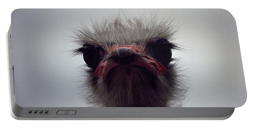 Birds Portable Battery Charger featuring the photograph Ostrich - The Sharp End by Rod Johnson