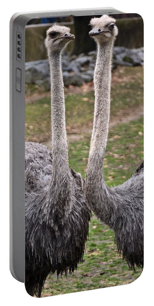 Ostrich Portable Battery Charger featuring the photograph Ostrich Twins 2 by Douglas Barnett