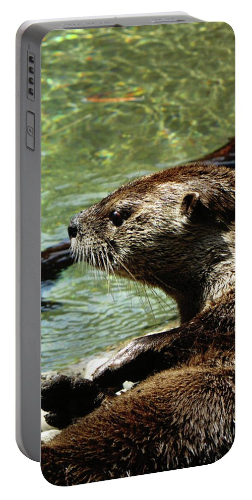 Otter Portable Battery Charger featuring the photograph Otter by September Stone