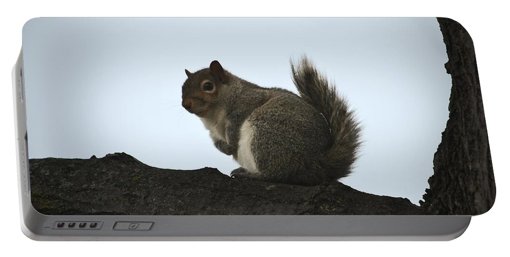 Squirrel Portable Battery Charger featuring the photograph Our Squirrel Chubby by Teresa Mucha