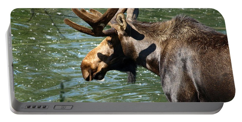Wildlife Portable Battery Charger featuring the photograph Out For Lunch by DeeLon Merritt
