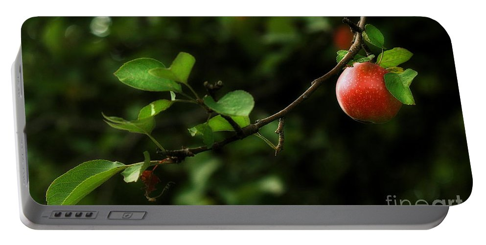 Adam And Eve Portable Battery Charger featuring the photograph Out On A Limb A Tempting Photograph Of A Tasty Ripe Red Apple On A Tree by Angela Rath
