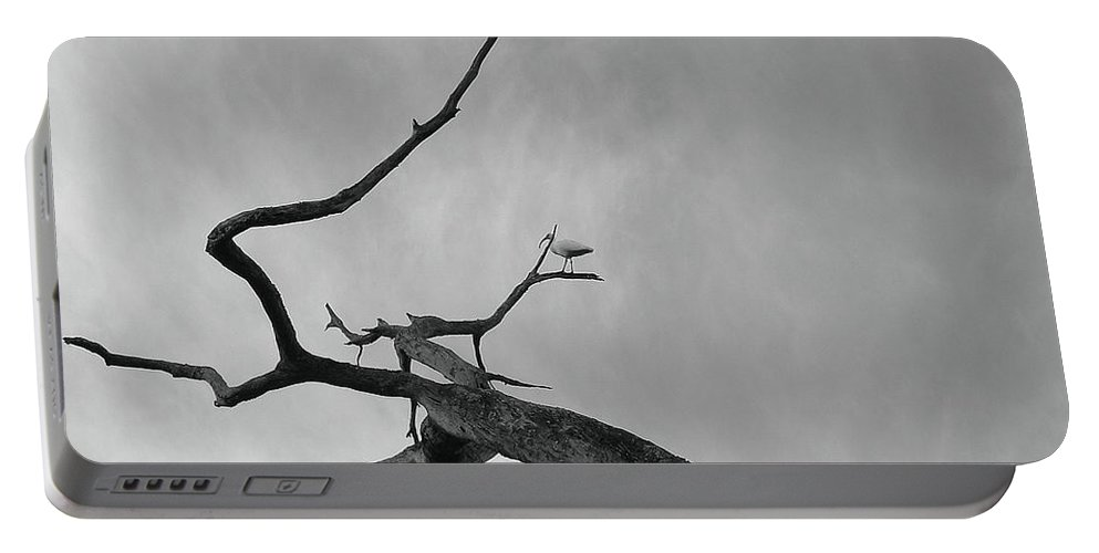 Birds Portable Battery Charger featuring the photograph Out On A Limb by Robert Meanor