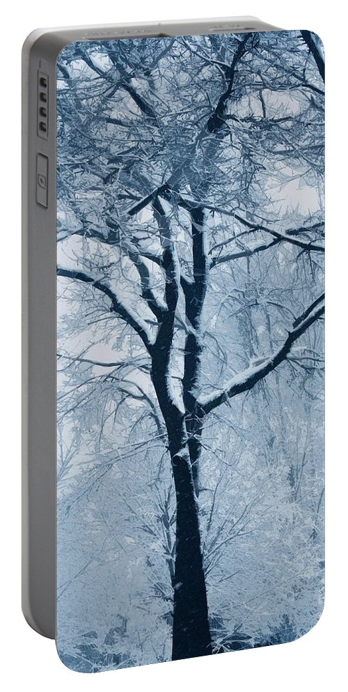 Trees Portable Battery Charger featuring the photograph Outside My Window by Linda Sannuti