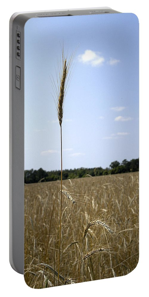 Oat Portable Battery Charger featuring the photograph Outstanding In Its Field. by Robert Ponzoni
