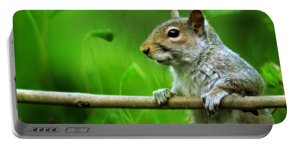 Squirrel Portable Battery Charger featuring the photograph Over The Fence Full Color by Angel Ciesniarska