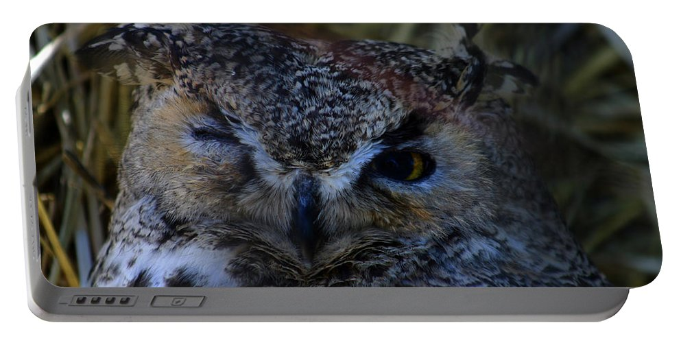 Owl Portable Battery Charger featuring the photograph Owl by Anthony Jones