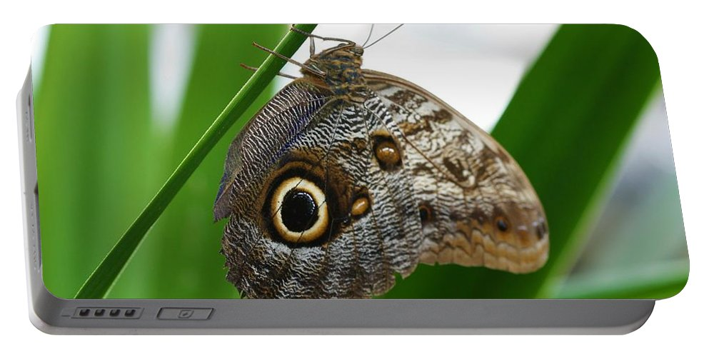 Butterfly Portable Battery Charger featuring the photograph Owl Butterfly by Kristina Jones