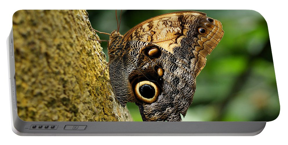Butterfly Portable Battery Charger featuring the photograph Owl Butterfly by Sandy Keeton