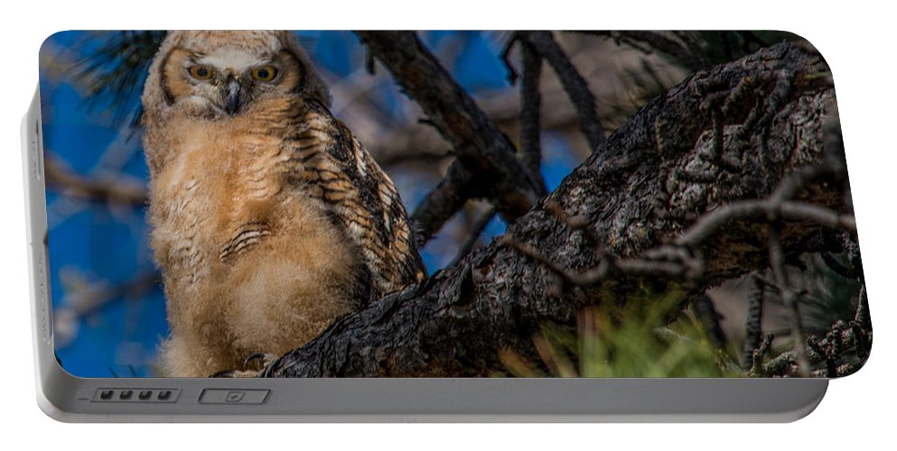 Bubo Virginianus Portable Battery Charger featuring the photograph Owlet In A Fir Tree by Dawn Key
