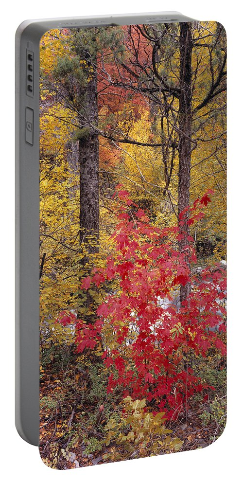 Autumn Portable Battery Charger featuring the photograph Painted Forest by Leland D Howard