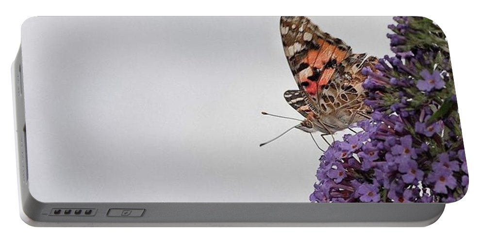 Insectsofinstagram Portable Battery Charger featuring the photograph Painted Lady (vanessa Cardui) by John Edwards