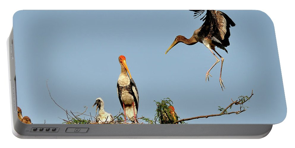 Bird Portable Battery Charger featuring the photograph Painted Stork by Manjot Singh Sachdeva