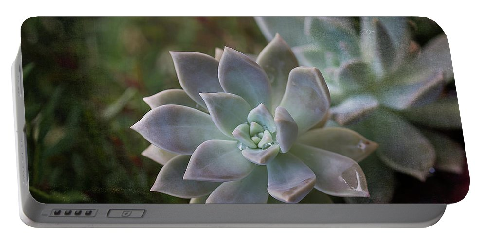 Succulent Portable Battery Charger featuring the photograph Pale Succulent On Artistic Background, Macro by Sharon Minish