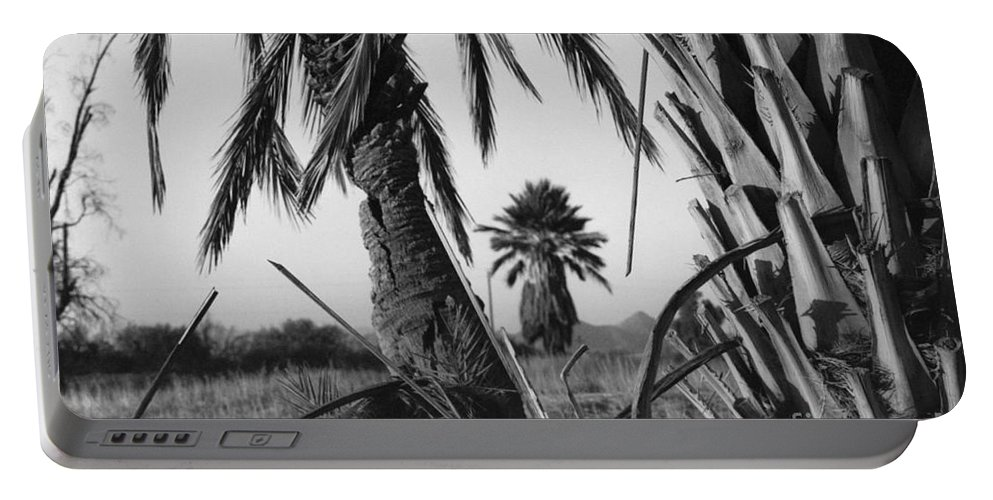 Black And White Photograpy Portable Battery Charger featuring the photograph Palm In View Bw Horizontal by Heather Kirk