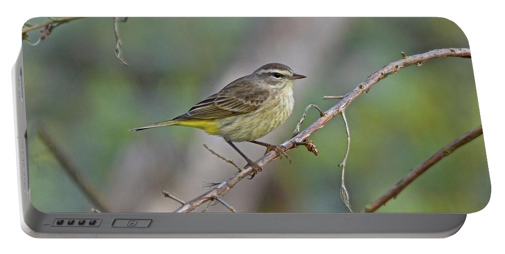 Warbler Portable Battery Charger featuring the photograph Palm Warbler by Carol Bradley