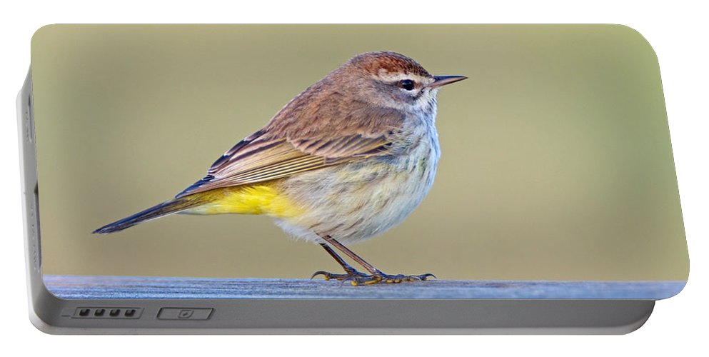 Palm Warbler Portable Battery Charger featuring the photograph Palm Warbler by John Harmon