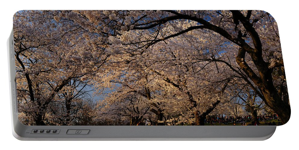 Hanami Portable Battery Charger featuring the photograph Panorama Of Forest Of Sakura Japanese Flowering Cherry Trees Wit by Reimar Gaertner