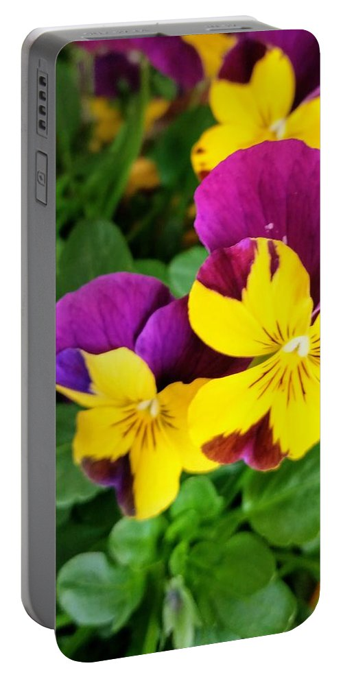 Pansies Portable Battery Charger featuring the photograph Pansies 2 by Valerie Josi