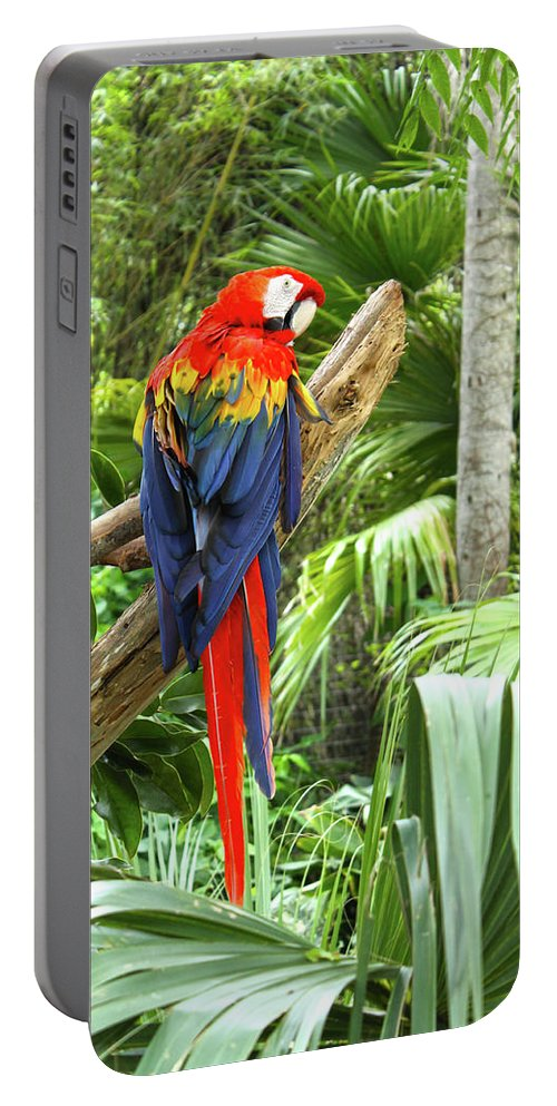 Bird Portable Battery Charger featuring the photograph Parrot In Tropical Setting by Sharon Minish