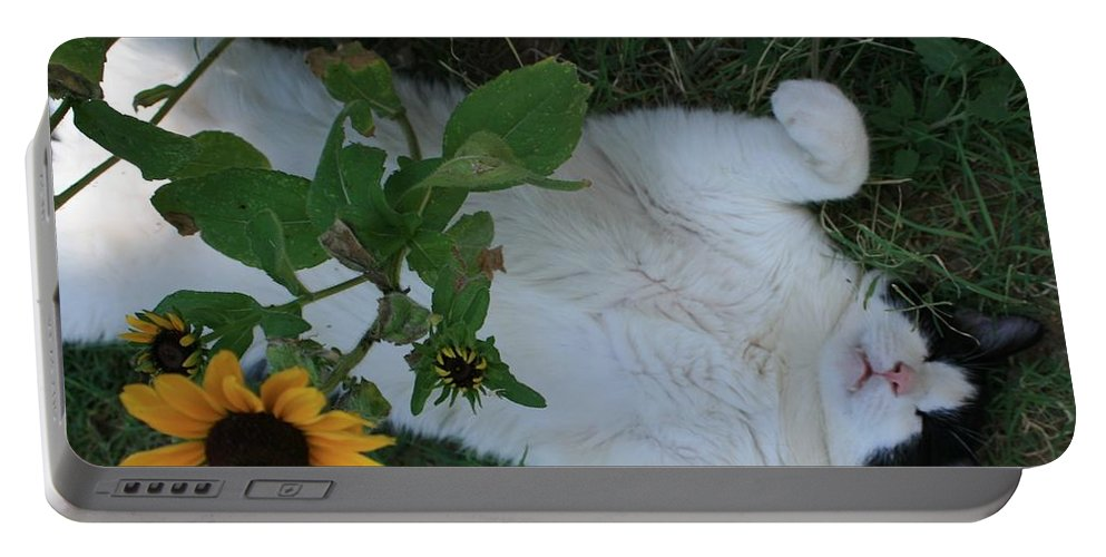 Daisies Portable Battery Charger featuring the photograph Passed Out Under The Daisies by Marna Edwards Flavell