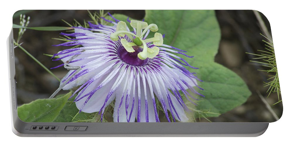 Flower Portable Battery Charger featuring the photograph Passion by Michael Peychich