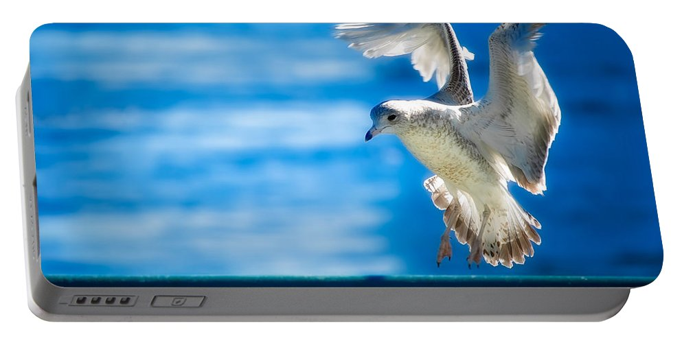 Animal Portable Battery Charger featuring the photograph Peace Gull by Rich Leighton