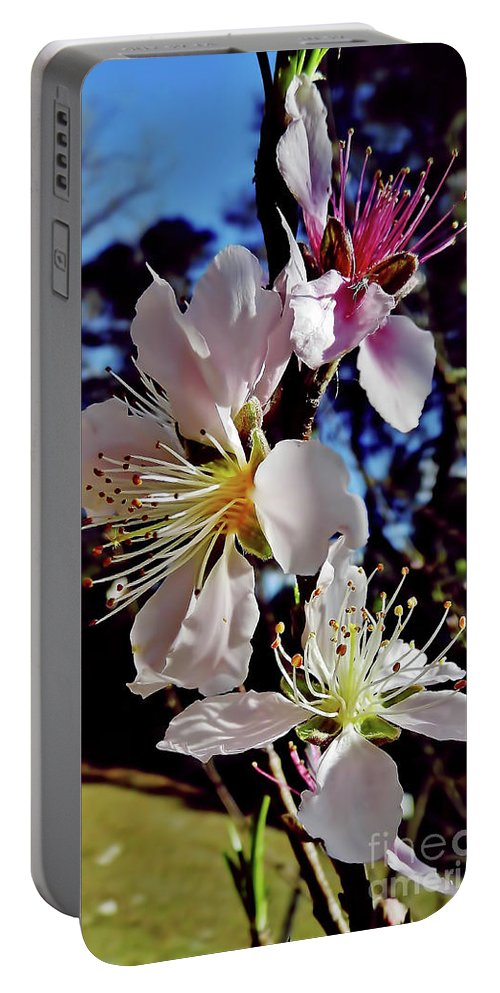 Peach Blossom Portable Battery Charger featuring the photograph Peach Blossoms by D Hackett