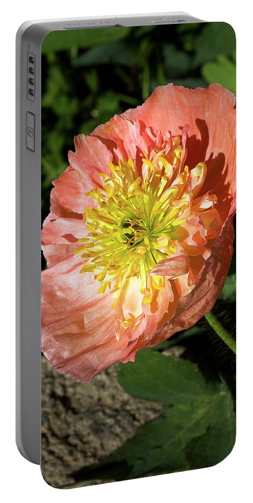 Poppy Portable Battery Charger featuring the photograph Peach Colored Poppy by Phyllis Denton