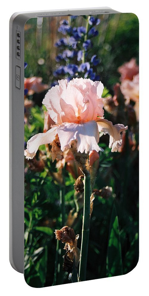 Flower Portable Battery Charger featuring the photograph Peach iris by Steve Karol