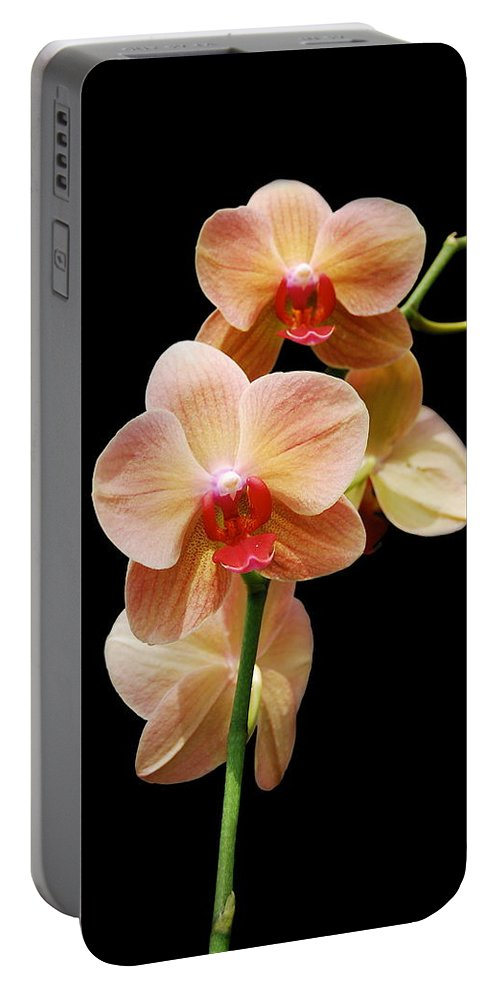 Orchids Portable Battery Charger featuring the photograph Peach Orchids by Michael Peychich