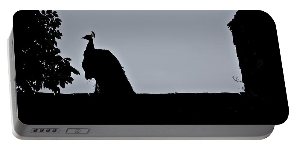 Peacock Portable Battery Charger featuring the photograph Peacock at Night by Douglas Barnett