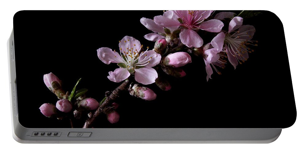 Peach Tree Portable Battery Charger featuring the photograph Peach Tree Blossum by Nancy Griswold