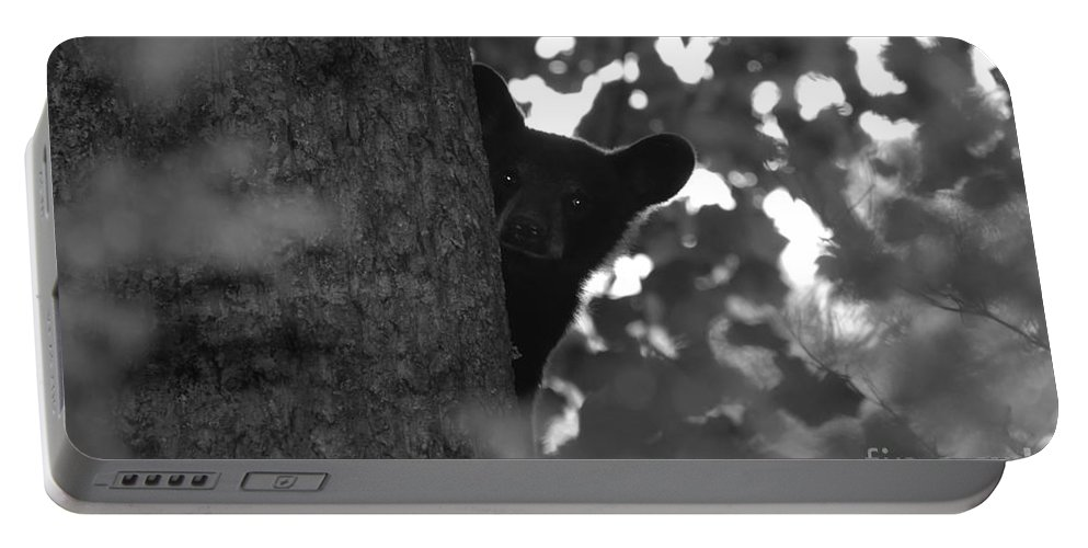 Black Bear Portable Battery Charger featuring the photograph Peek A Boo by David Lee Thompson
