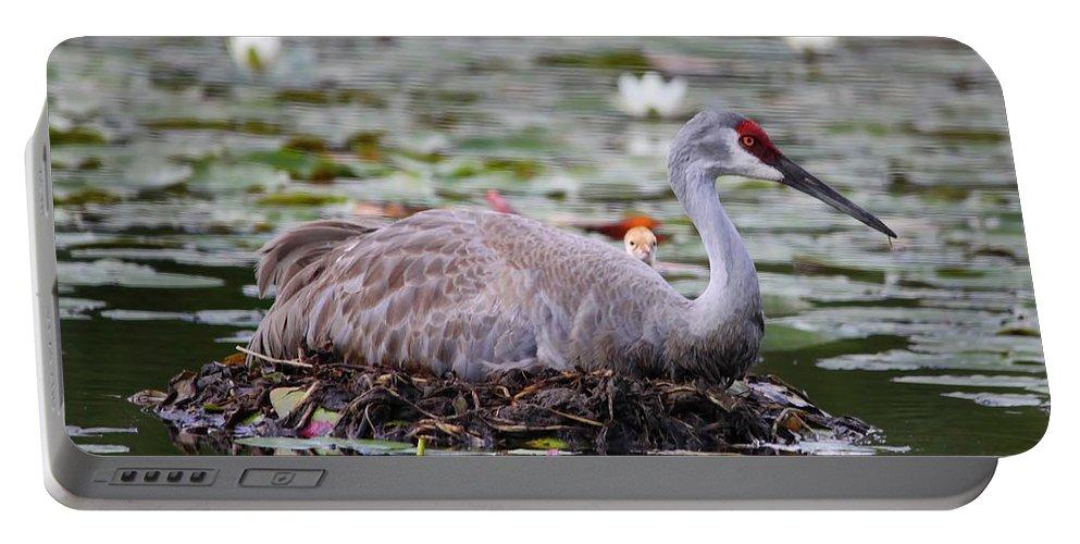 Sandhill Crane Portable Battery Charger featuring the photograph Peek A Boo by Deborah Benoit