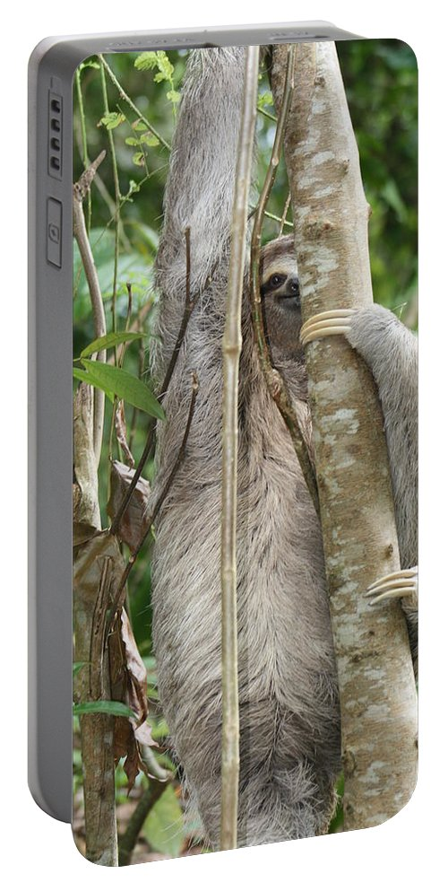 Sloth Portable Battery Charger featuring the photograph Peek-a-boo Sloth by Kelly Foreman