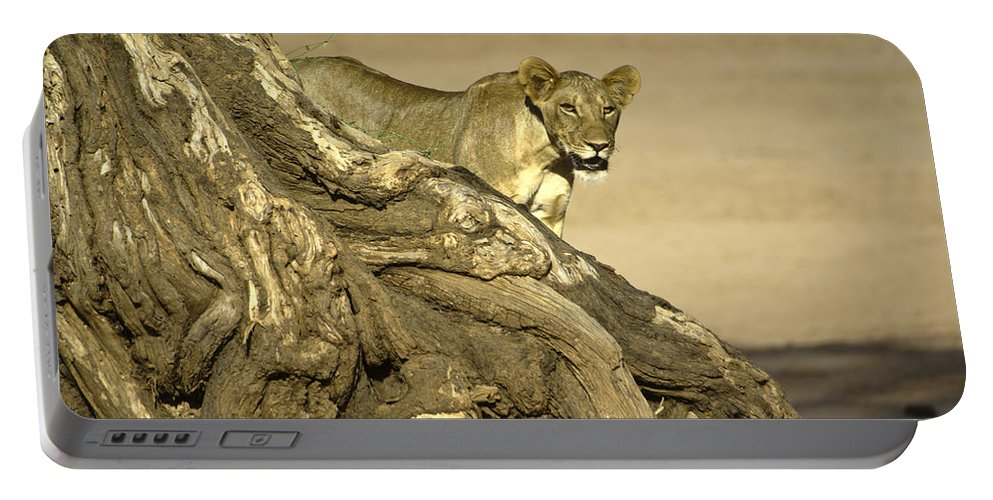 Africa Portable Battery Charger featuring the photograph Peeking Out by Michele Burgess