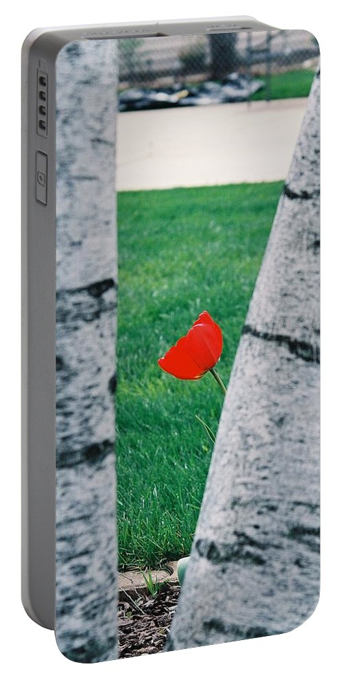 Tulip Portable Battery Charger featuring the photograph Peeking Tulip by Lauri Novak