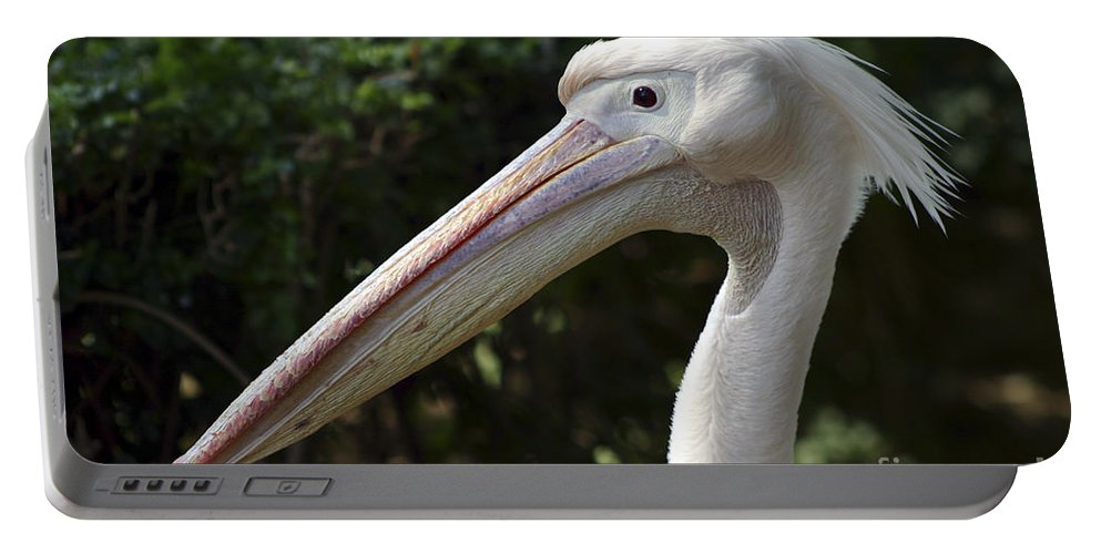 Close Up Portable Battery Charger featuring the photograph Pelican by Danny Yanai
