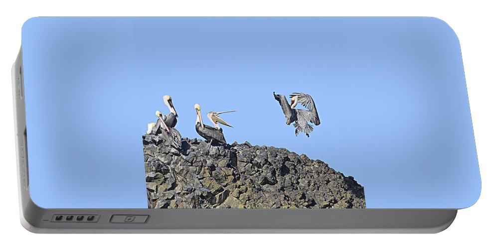 Beach Portable Battery Charger featuring the photograph Pelican Landing On A Rock by Marv Vandehey