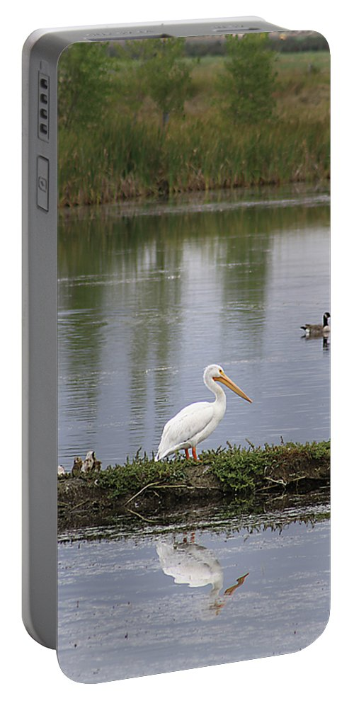 Bird Portable Battery Charger featuring the photograph Pelican Reflection by Alyce Taylor