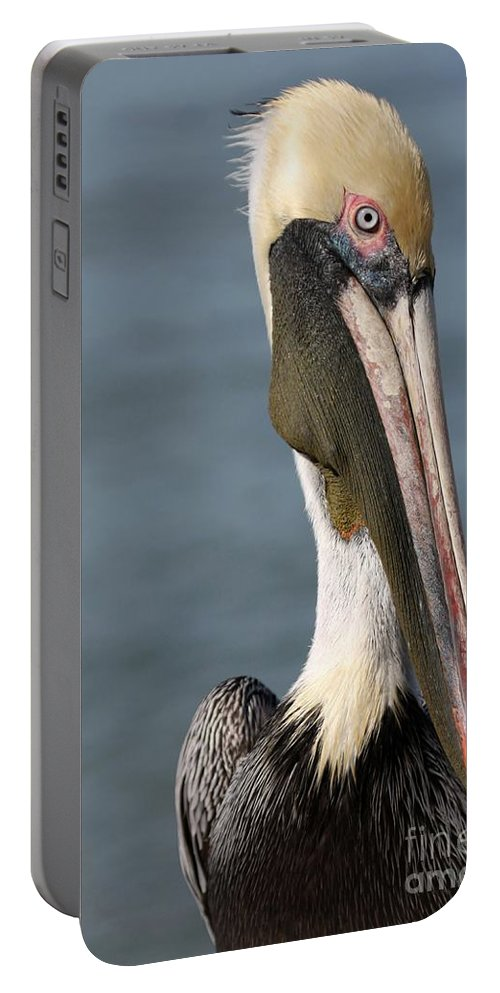 Bird Portable Battery Charger featuring the photograph Pelican by Sabrina L Ryan