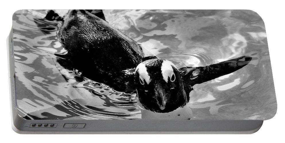 Penguin Portable Battery Charger featuring the photograph Penguin Portrait by Diann Fisher