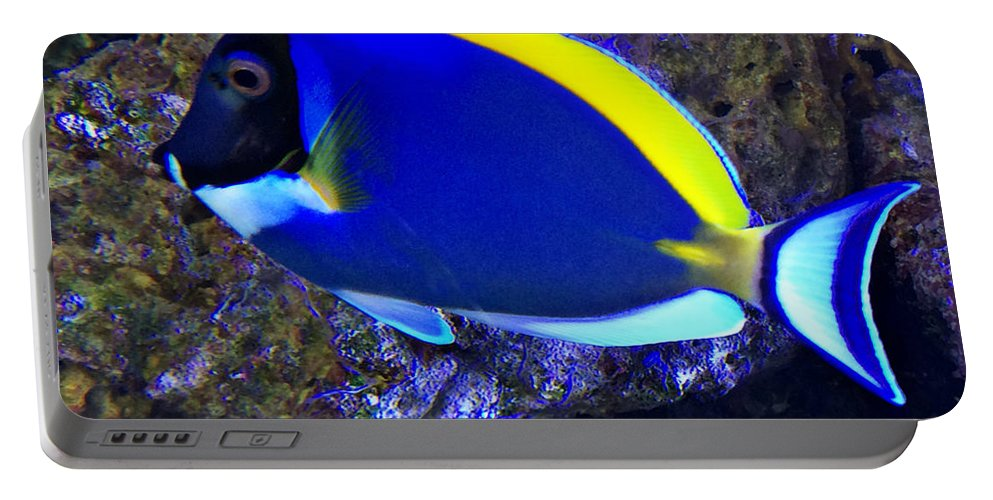 Blue Tang Fish Portable Battery Charger featuring the photograph Blue Tang Fish by Kathy M Krause