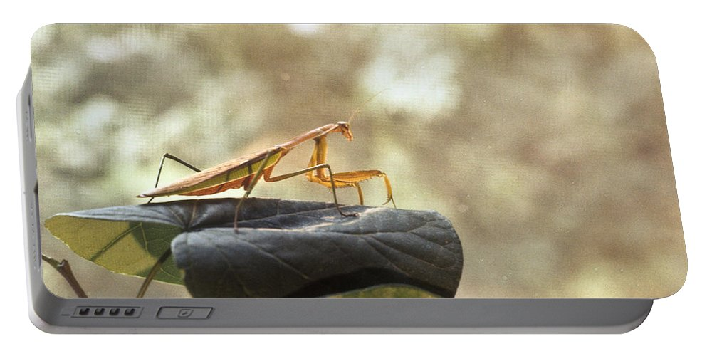Praying Portable Battery Charger featuring the photograph Pensive Mantis by Douglas Barnett