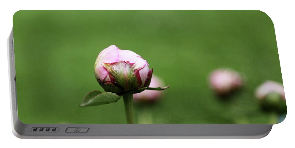 Pink Peony Portable Battery Charger featuring the photograph Peony Bud On Greenery by Brooke T Ryan