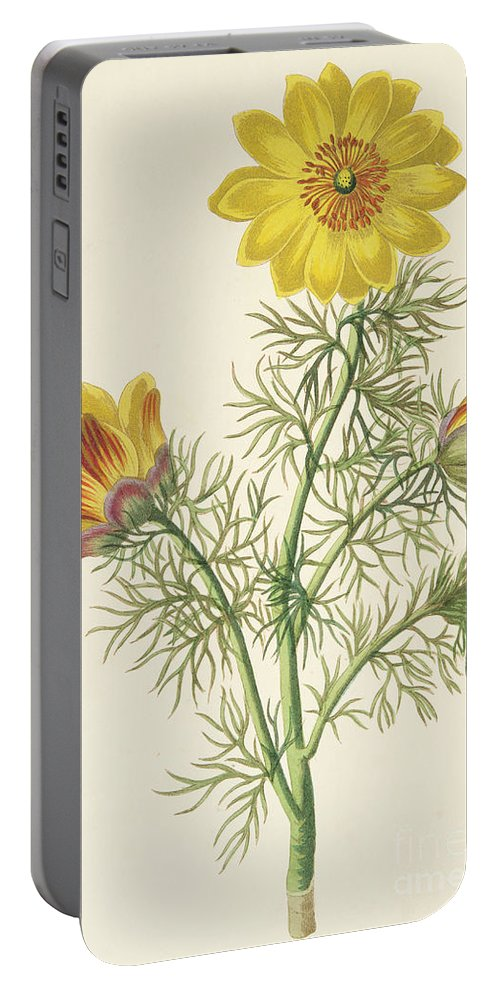 Perennial Adonis Portable Battery Charger featuring the painting Perennial Adonis by Pierre Puvis de Chavannes