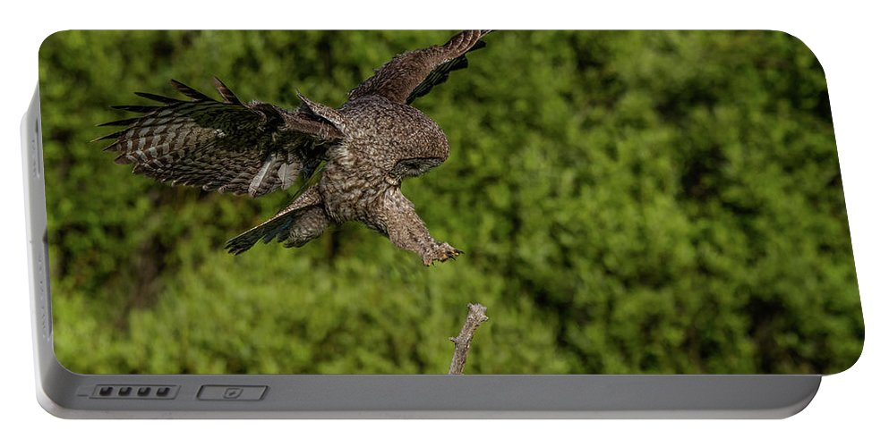 Great Grey Owl Portable Battery Charger featuring the photograph Perfect Form by Yeates Photography