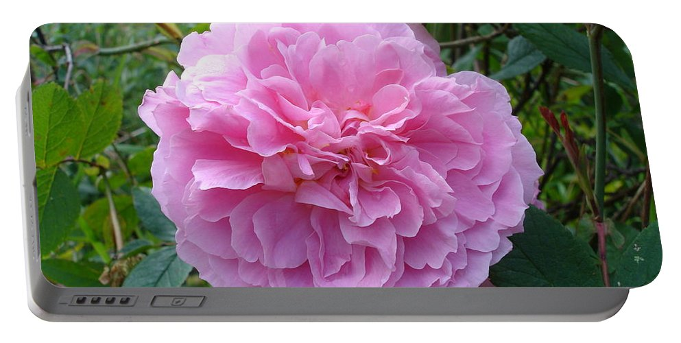 Rose Portable Battery Charger featuring the photograph Perfect Pink Rose by Susan Baker